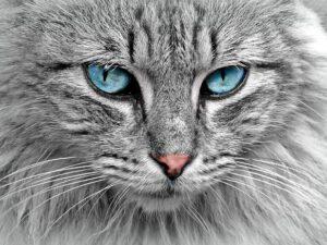 Katzen Ecke